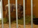zoo_13