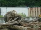 zoo_21