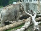 zoo_23